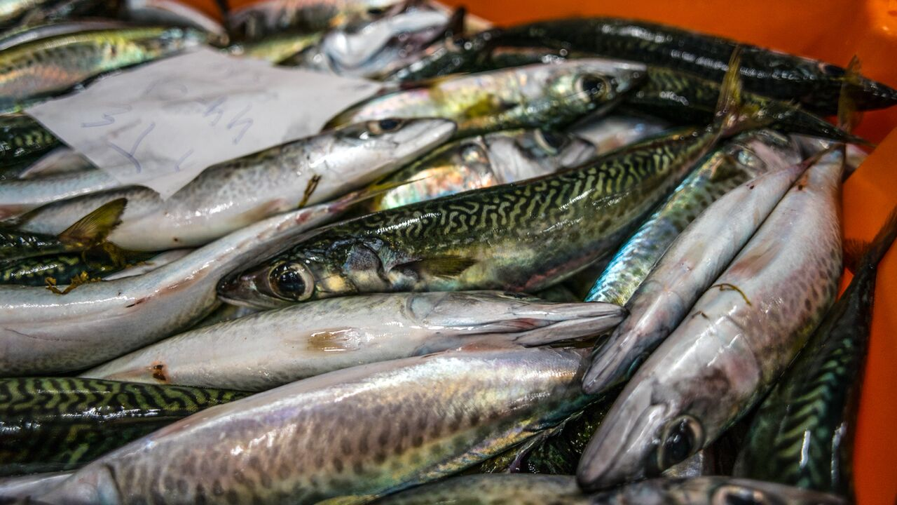 Close up of fish
