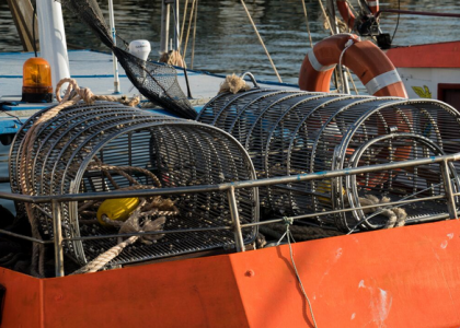 Can modified dredging gear reduce discards in clam fisheries?