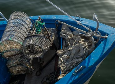 New MINOUW research shows better selectivity boosts fish stocks and profits